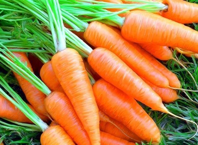 Лучшая морковь для посадки в Ленинградской области