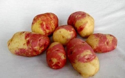 Описание и характеристики картофеля сорта джувел, посадка и уход