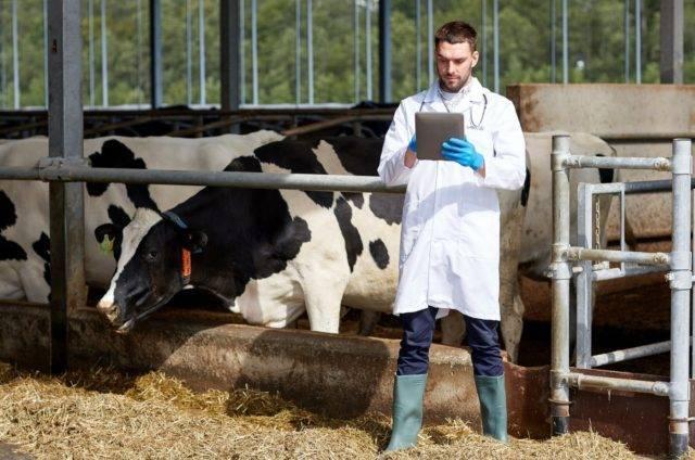 Почему корова потеет интересная информация