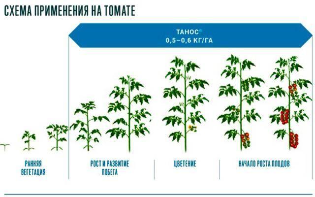 Как использовать фунгицид превикур энерджи для томатов, картофеля, огурцов и цветочных культур