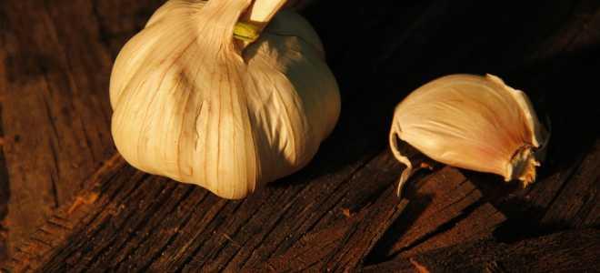 Как хранить чеснок в домашних условиях?