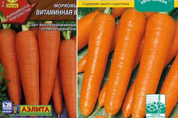 Морковь витаминная 6: полная характеристика и описание сорта, история селекционирования и выращивание, а также достоинства и недостатки, сбор и хранение урожая