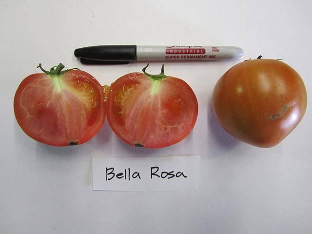 Томат белла роса: характеристика и описание сорта, урожайность фото и отзывы