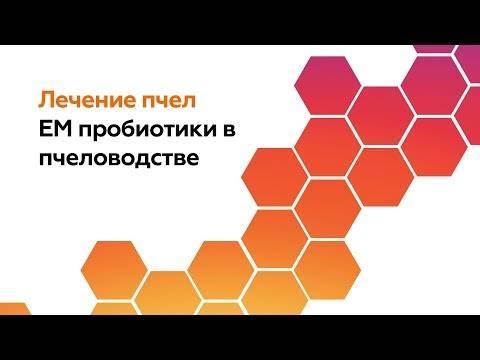 Болезни пчел и методы их лечения
