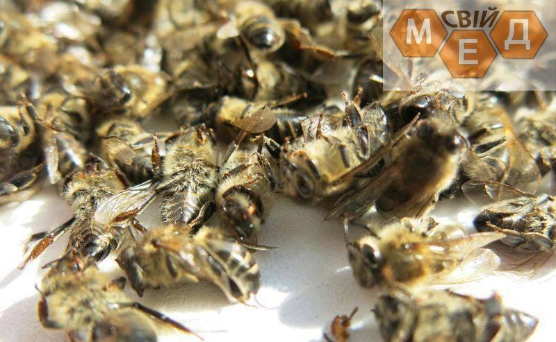 Пчелиный подмор: рецепты для суставов