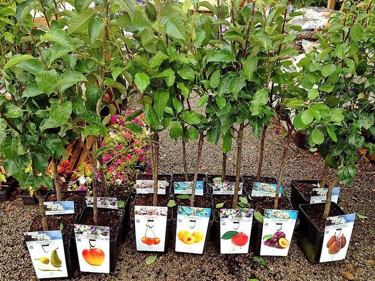 Лучшее время посадки плодовых деревьев в подмосковье: сажать весной или осенью?