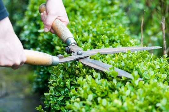 Как укрыть юкку на зиму? как ухаживать за растением на участке, как утеплить и сохранить, какая необходима подготовка? фото