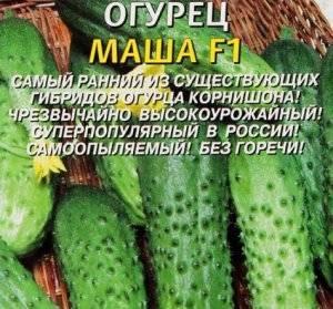 Огурцы сорта маша f1: ранние и урожайные