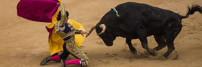 Все о быках (крс): мясные породы, различают ли цвета, интересные факты