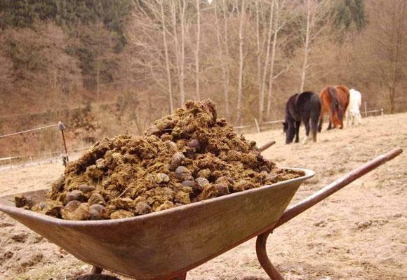 Использование кроличьего навоза как удобрения для огорода