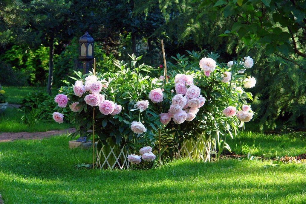 Дизайн с ирисами: фото иридария в саду, цветник с ирисами в ландшафтном дизайне