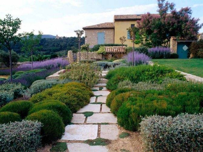 Хвойные композиции в ландшафтном дизайне: виды хвойников, схема посадки в саду, уход за хвойниками