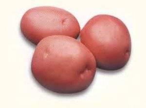 """Картофель """"маргарита"""" с подробным описанием сорта, характеристика сорта и фото"""