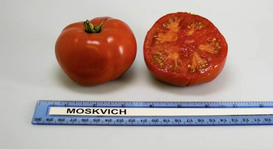 Томат москвич характеристика и описание сорта