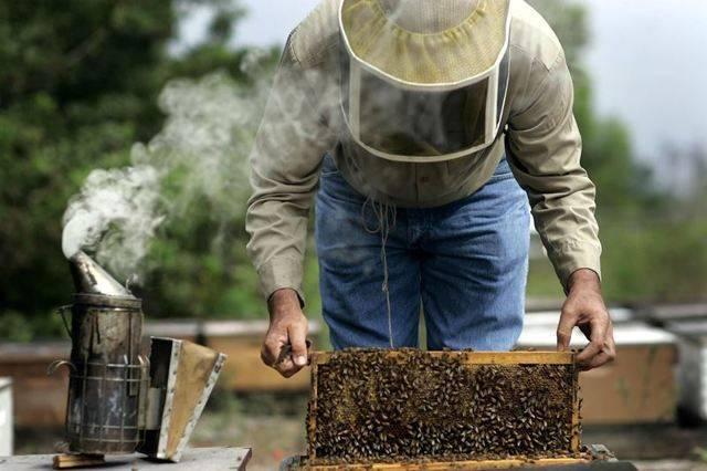 Как открыть бизнес по производству меда
