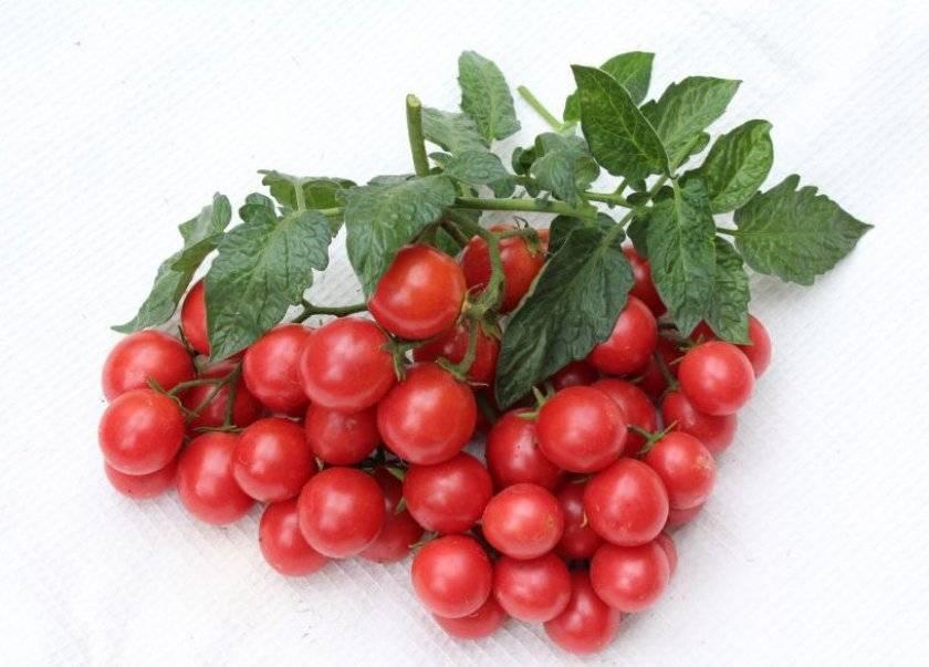 Характеристики и выращивание сорта томата линда