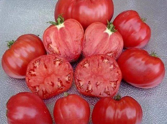 """Томат """"абаканский розовый"""": описание сорта, где растут лучше, характеристики плодов-помидоров, урожайность, рекомендации по выращиванию, фото-материалы"""