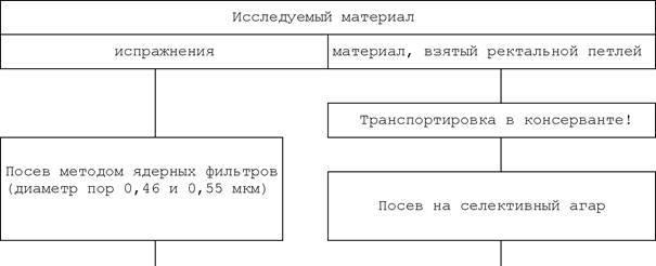 Вибриоз КРС