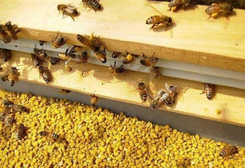 Подкормка пчел сахарным сиропом осенью