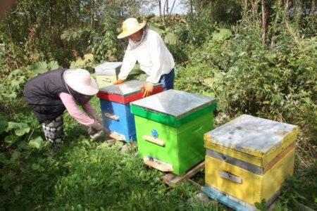 Расширения гнезда пчел: когда и как, весеннее расширение