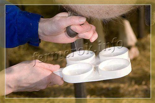 Классификация маститов у коров