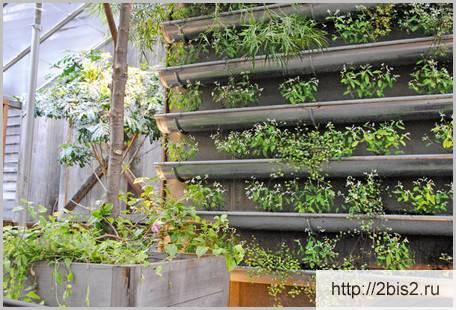 Функции и способы вертикального озеленения - общая информация - 2020