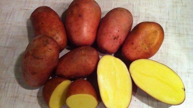 Картофель родриго описание сорта фото отзывы