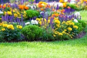 Цветник непрерывного цветения из многолетников: виды цветов и схемы