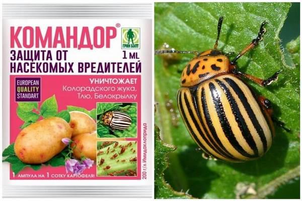 Командор от колорадского жука: инструкция по применению, отзывы, вред для человека