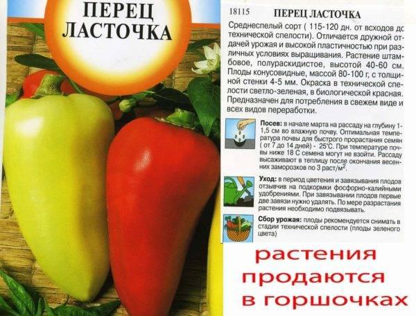 Описание и правильное выращивание сорта перцев ласточка