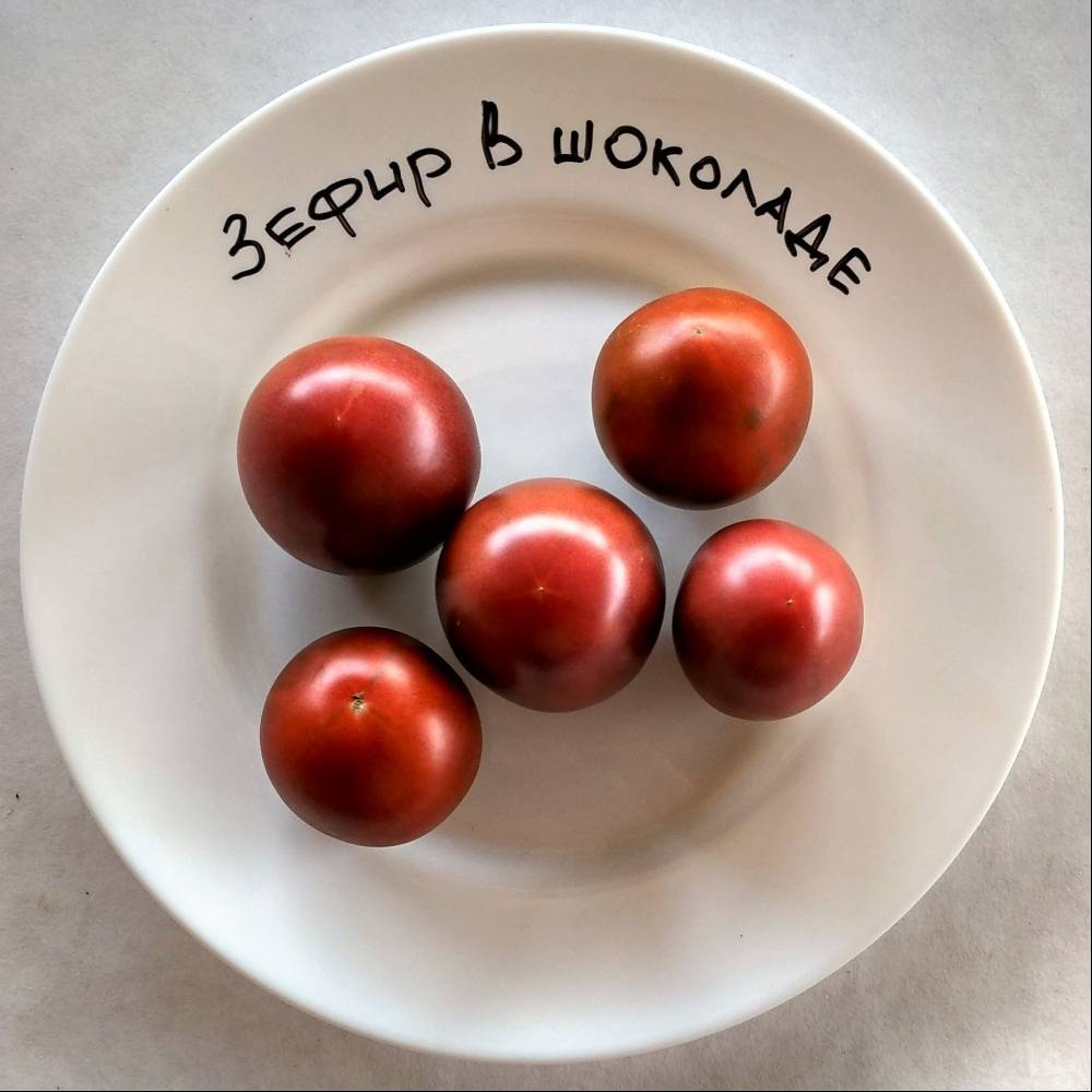 Выращиваем «зефир в шоколаде» — томат с уникальными характеристиками: описание сорта и фото