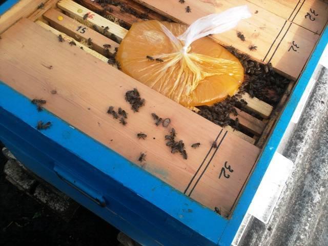 Подкормка пчел весной сахарным сиропом