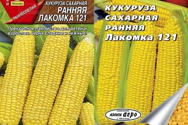 Выращивание и уход за сахарной кукурузой
