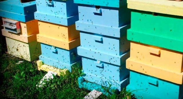 Ульи из пенополистирола: как сделать своими руками? чертежи и размеры для изготовления ульев из пенопласта, пеноплекса. отзывы пчеловодов