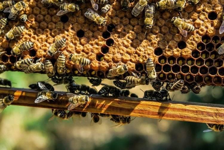 Чудо-мазь валентины сеймовой из пчелиного воска, желтка, масла