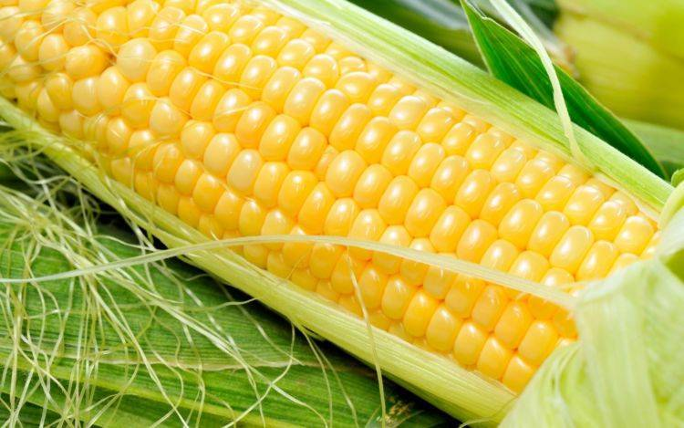 Посадка кукурузы Бондюэль