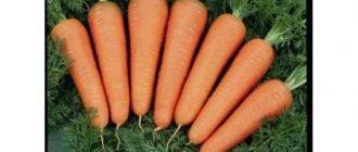 Морковь каскад описание сорта