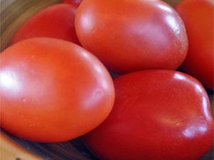 Сорт томата «земляк»: фото, видео, отзывы, описание, характеристика, урожайность
