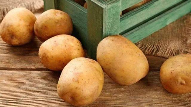 Ранние сорта картофеля для посадки в разных регионах россии.   красивый дом и сад