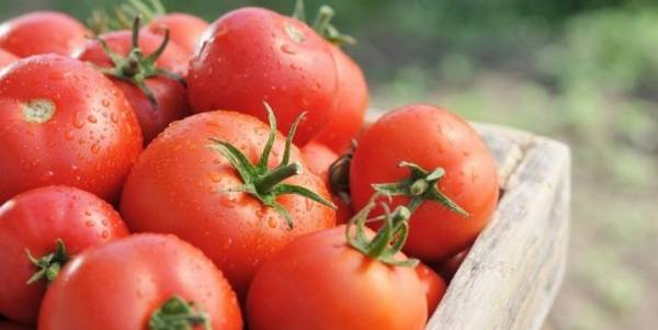 Томат богата хата: описание и характеристика сорта, выращивание и уход