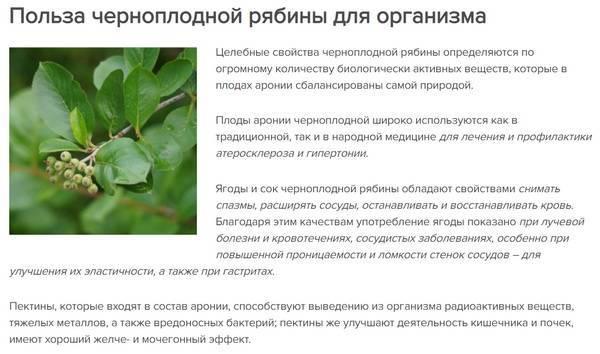 Рябина черноплодная — лечебные свойства, применение и рецепты