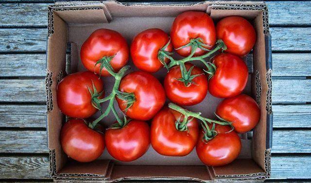 Чем хорош томат спасская башня: характеристика и описание сорта