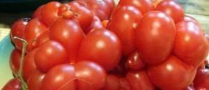 Помидоры коктейльного типа — томат форте розе f1: описание сорта и особенности его выращивания