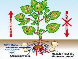 Престиж для обработки картофеля – 12 главных особенностей и инструкция по правильному применению