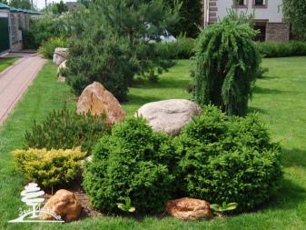 Как и когда посадить можжевельник в саду осенью