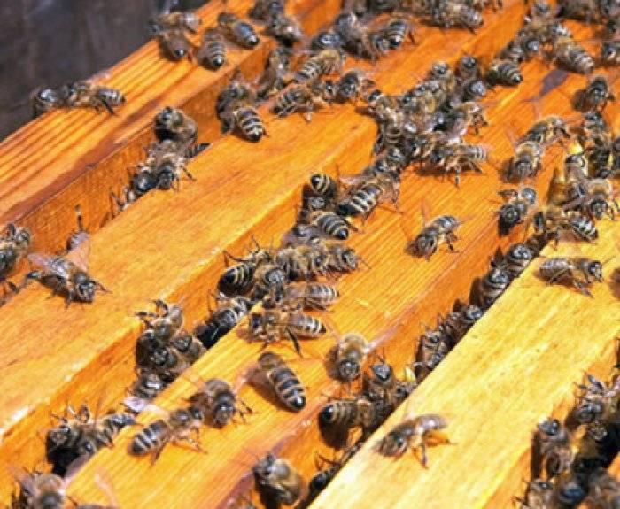 Сколько рамок с медом оставить пчелам на зиму в улье: всего можно и нужно