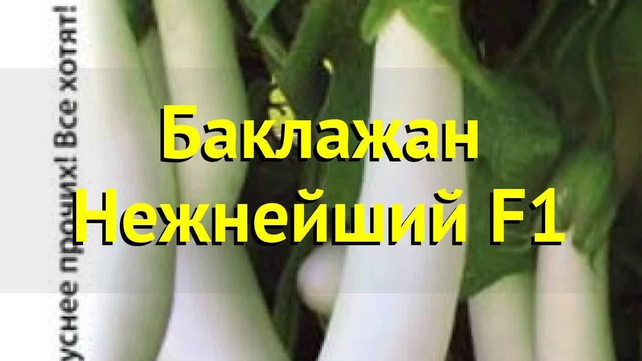 Описание и особенности посадки баклажана «валентина»