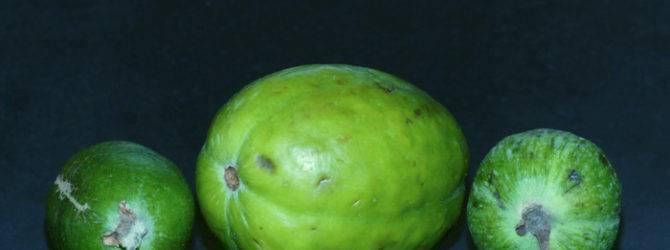 Фрукт лайм – ценные качества ближайшего родственника лимона