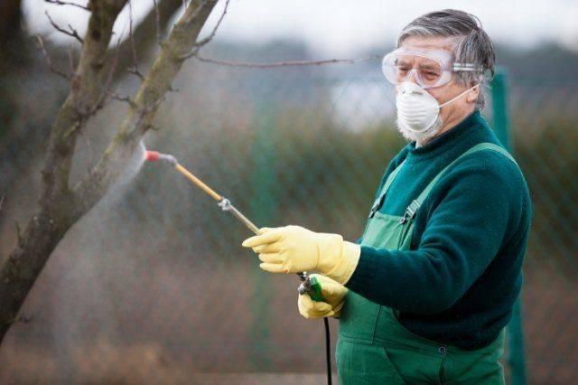 Как спасти яблоню, если кору объели мыши