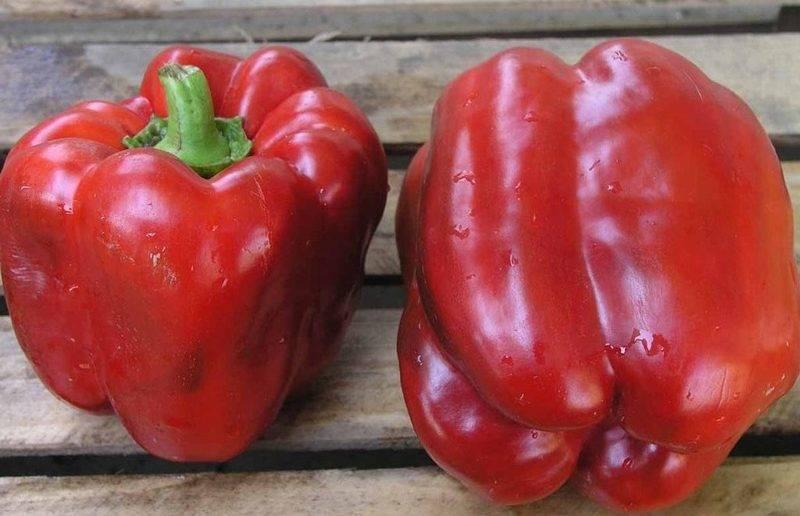 Перец сладкий адмирал нахимов f1 - фото урожая, цены, отзывы и особенности выращивания